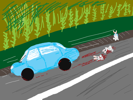 car kills 2 rabbits on a highway 1 rabbit escapes