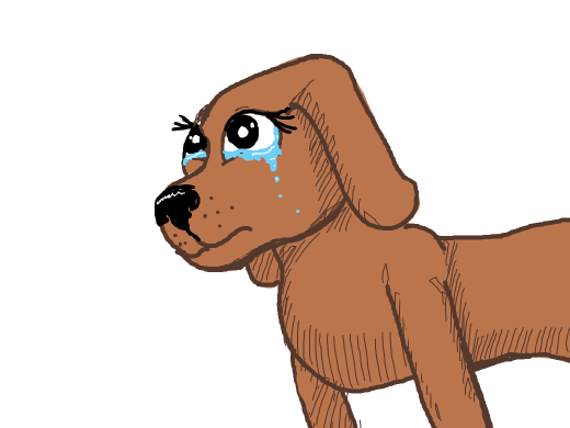 A crying dog with long eye lashes