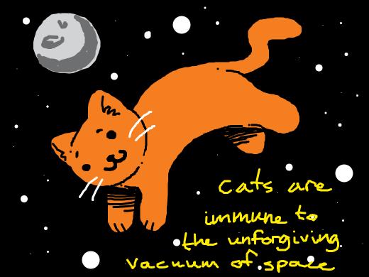a cat in space